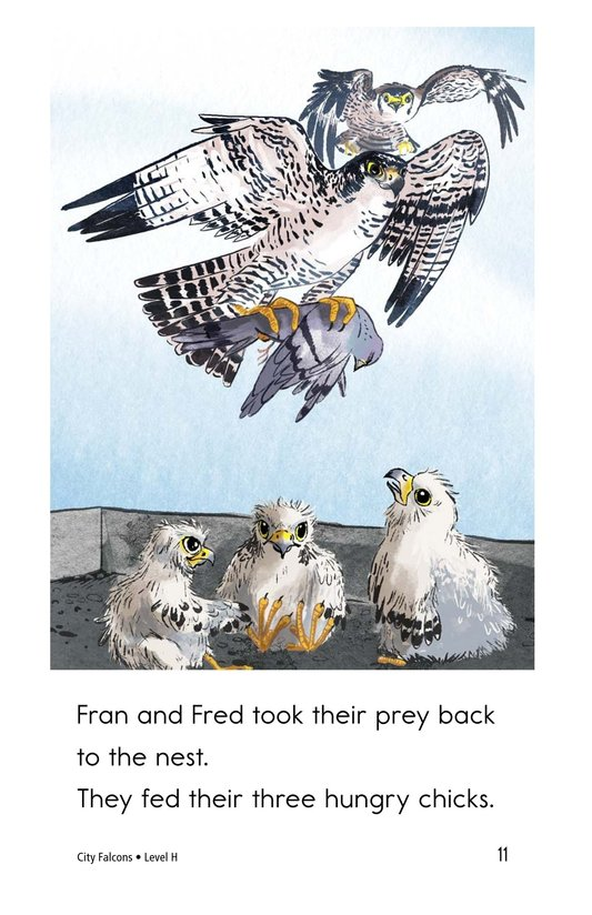 Book Preview For City Falcons Page 11