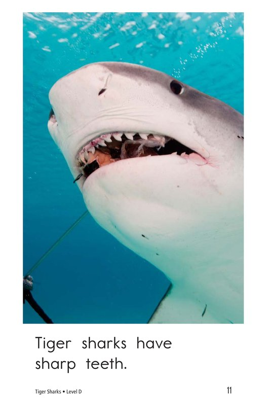 Book Preview For Tiger Sharks Page 11