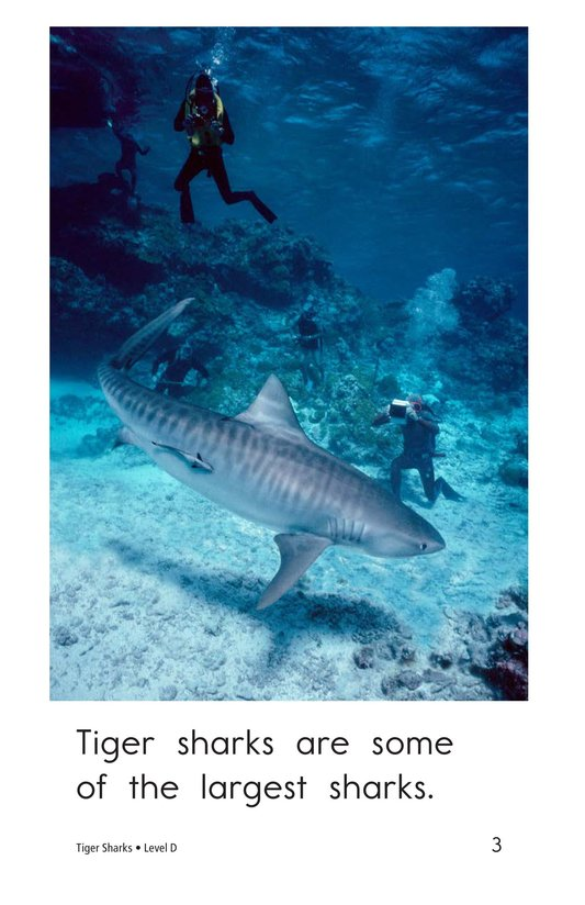 Book Preview For Tiger Sharks Page 3