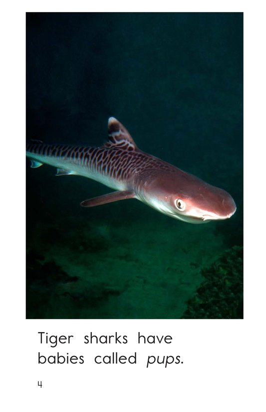 Book Preview For Tiger Sharks Page 4