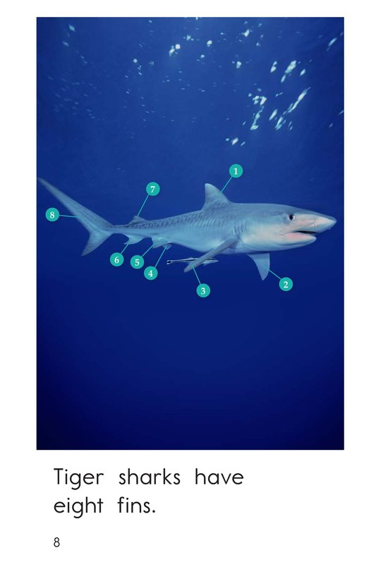Book Preview For Tiger Sharks Page 8