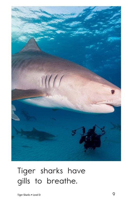 Book Preview For Tiger Sharks Page 9