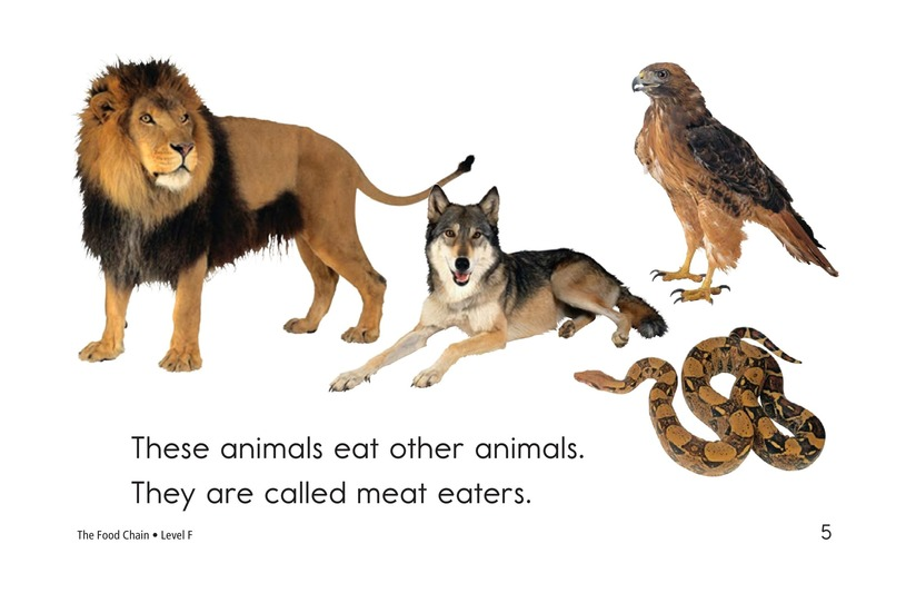 Book Preview For The Food Chain Page 5