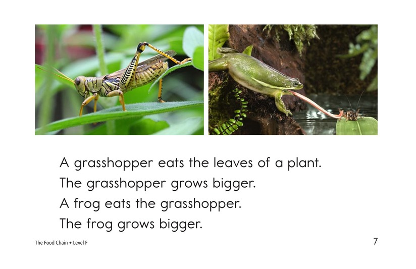 Book Preview For The Food Chain Page 7