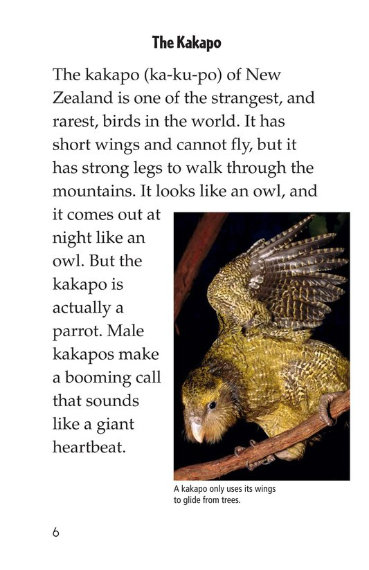 Book Preview For Endangered Birds Page 6