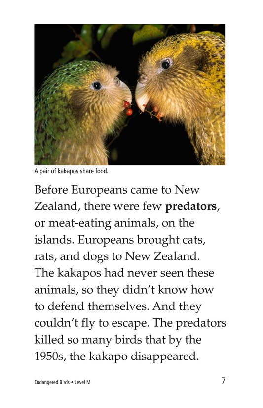 Book Preview For Endangered Birds Page 7