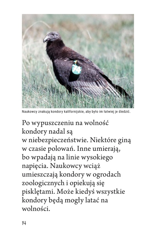Book Preview For Endangered Birds Page 14