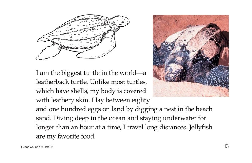 Book Preview For Ocean Animals Page 13