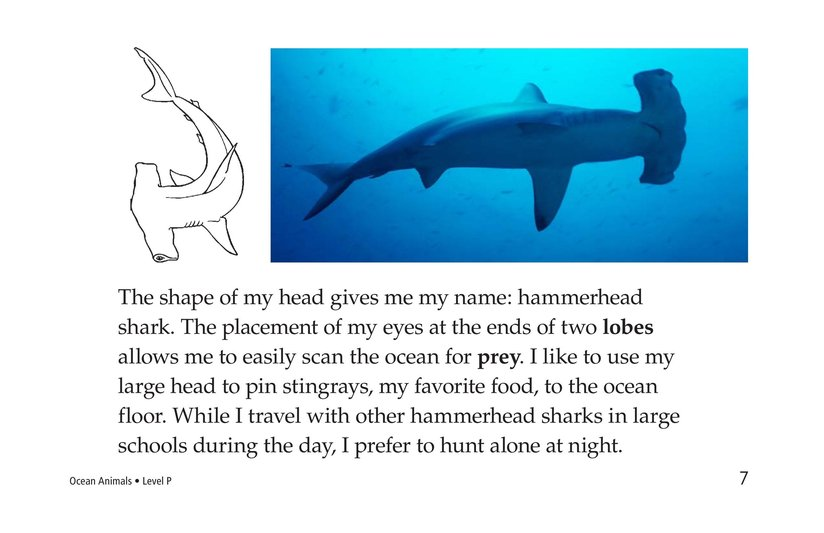 Book Preview For Ocean Animals Page 7