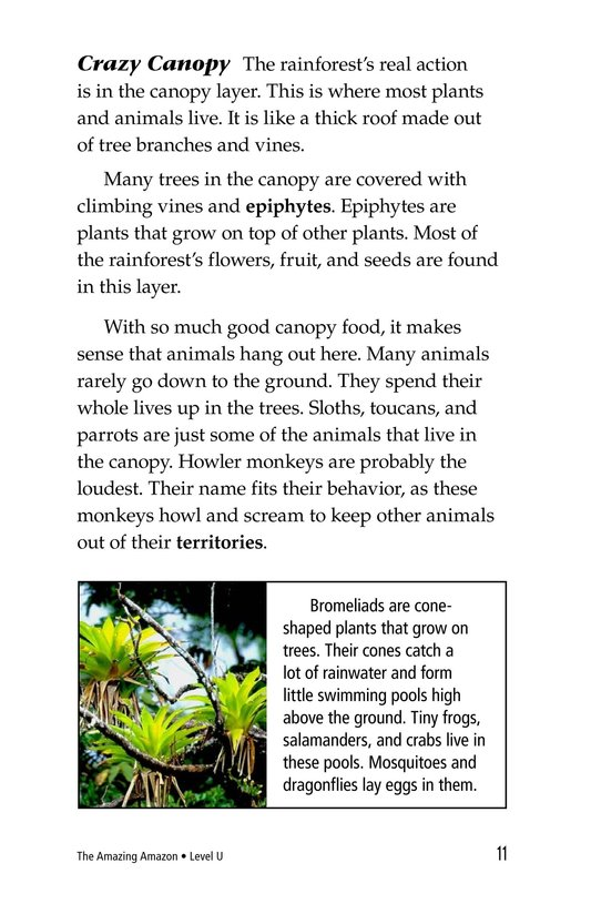 Book Preview For The Amazing Amazon Page 11