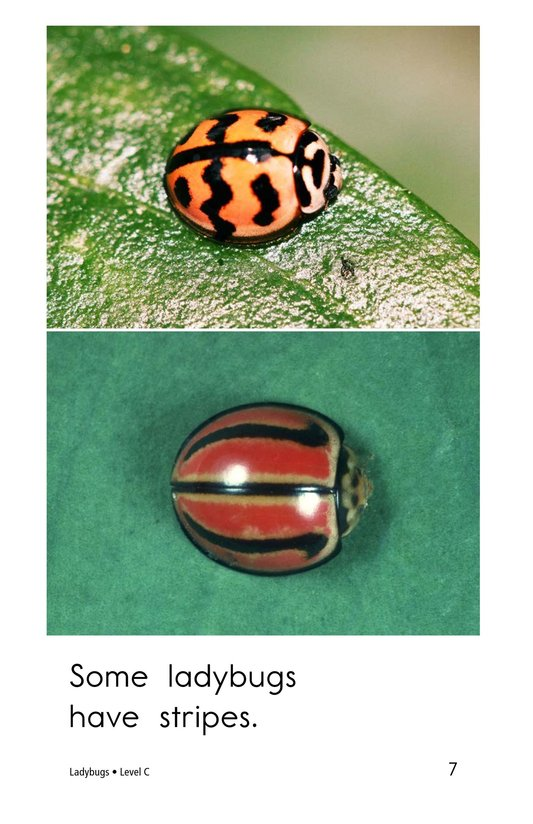 Book Preview For Ladybugs Page 7