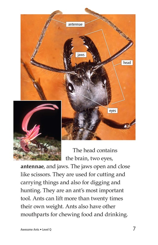 Book Preview For Awesome Ants Page 7