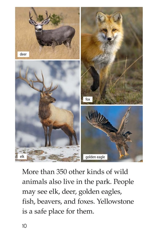 Book Preview For Yellowstone: A Place of Wild Wonders Page 10
