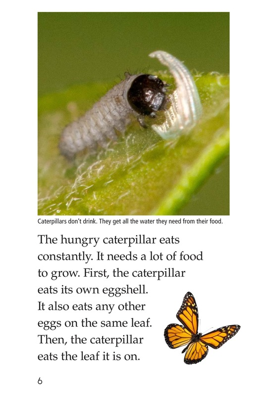 Book Preview For The Butterfly Life Cycle Page 6