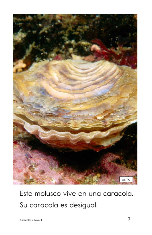 Book Preview For Seashells Page 7