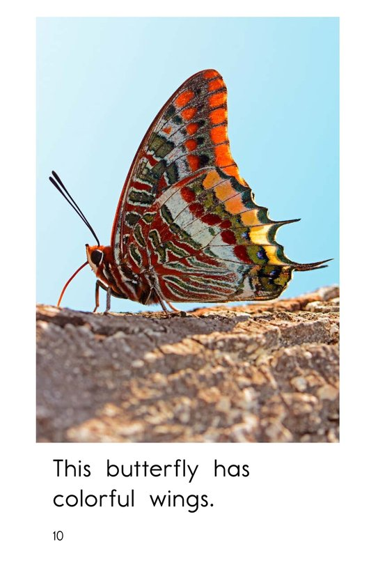 Book Preview For Insect Wings Page 10
