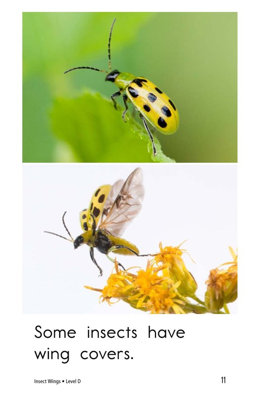 Book Preview For Insect Wings Page 11