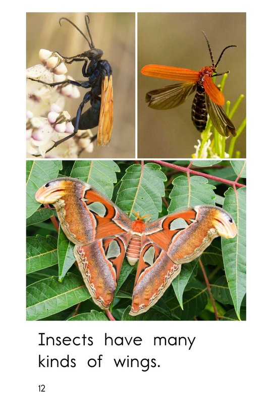 Book Preview For Insect Wings Page 12