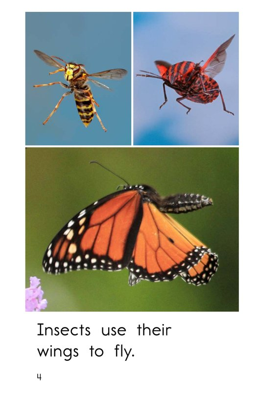Book Preview For Insect Wings Page 4