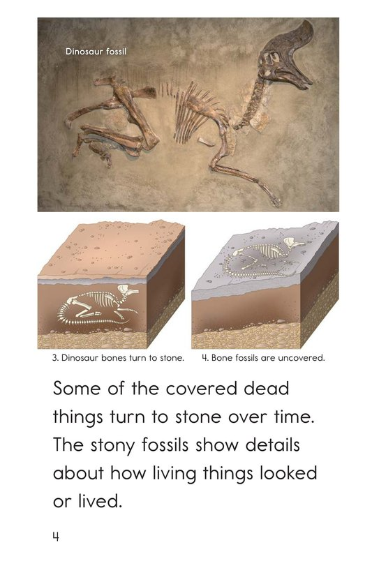 Book Preview For A Look at Fossils Page 4