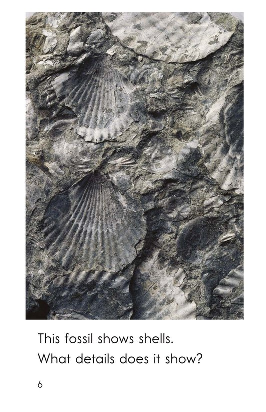 Book Preview For A Look at Fossils Page 6