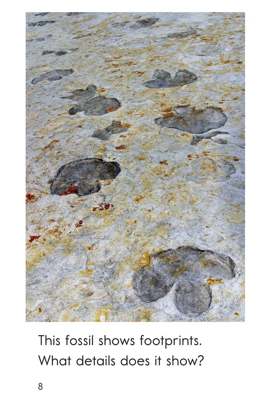 Book Preview For A Look at Fossils Page 8