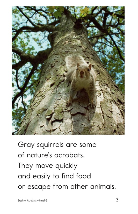 Book Preview For Squirrel Acrobats Page 3