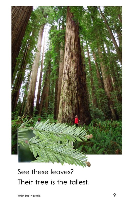 Book Preview For Which Tree? Page 9