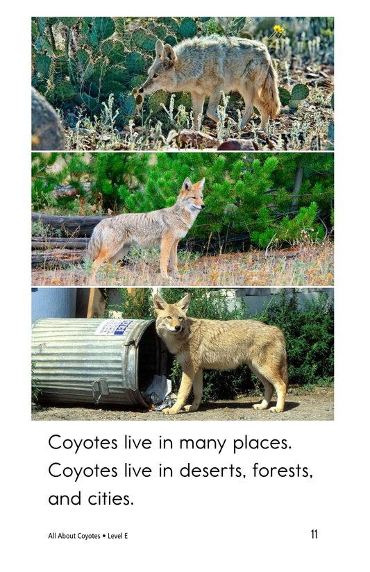Book Preview For All About Coyotes Page 11
