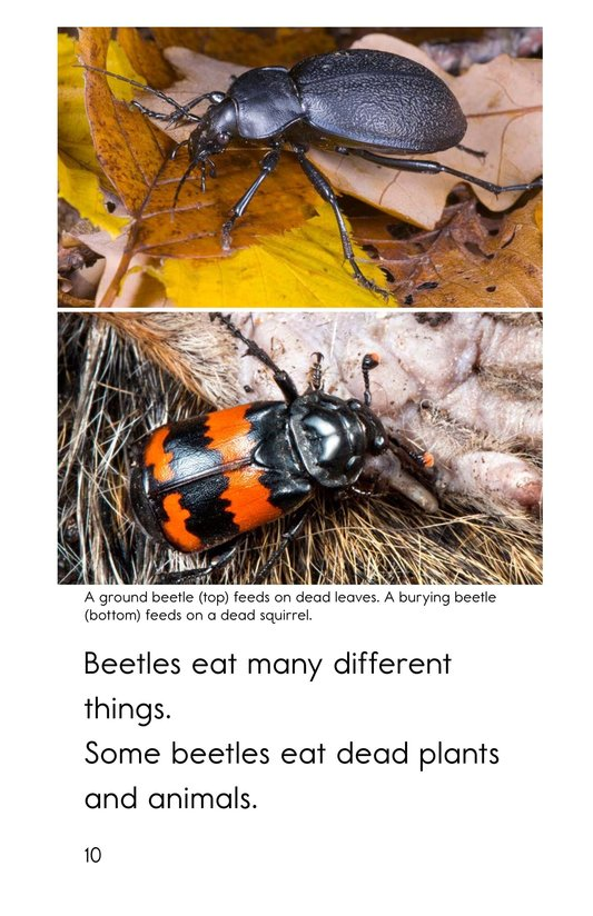 Book Preview For Meet the Beetles Page 10