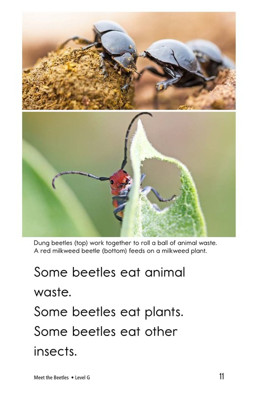 Book Preview For Meet the Beetles Page 11