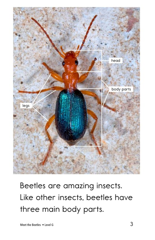 Book Preview For Meet the Beetles Page 3