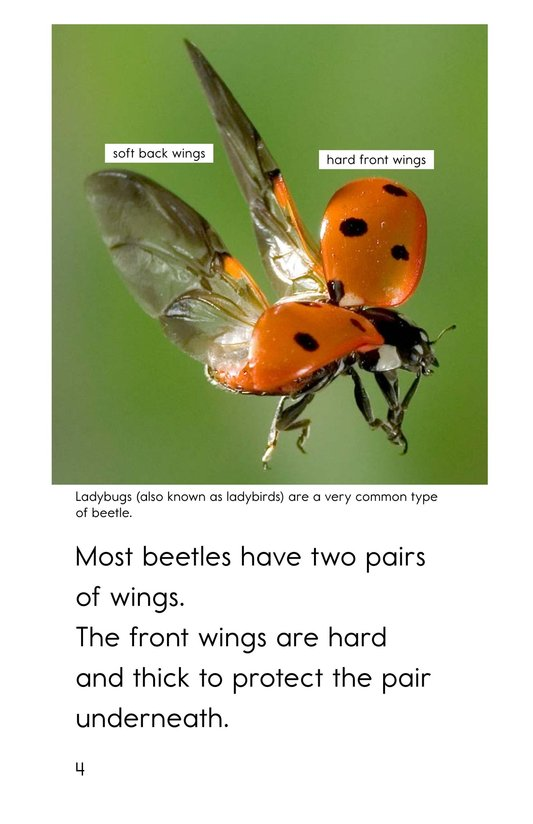 Book Preview For Meet the Beetles Page 4
