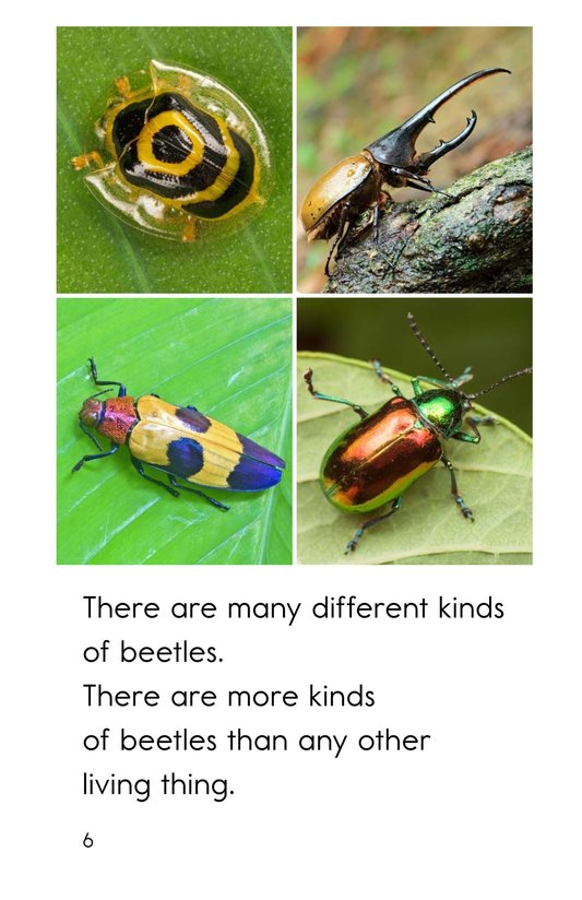 Book Preview For Meet the Beetles Page 6