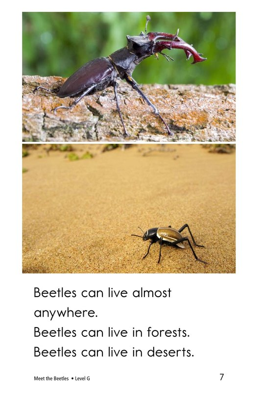 Book Preview For Meet the Beetles Page 7