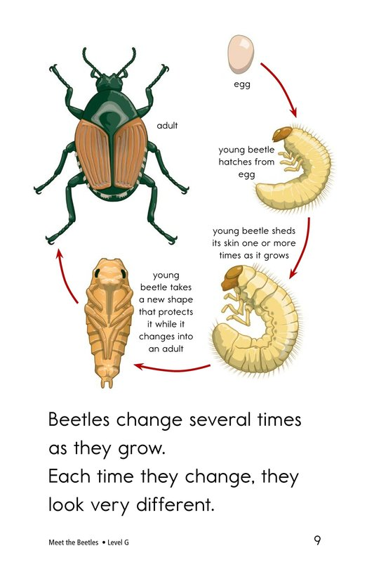 Book Preview For Meet the Beetles Page 9
