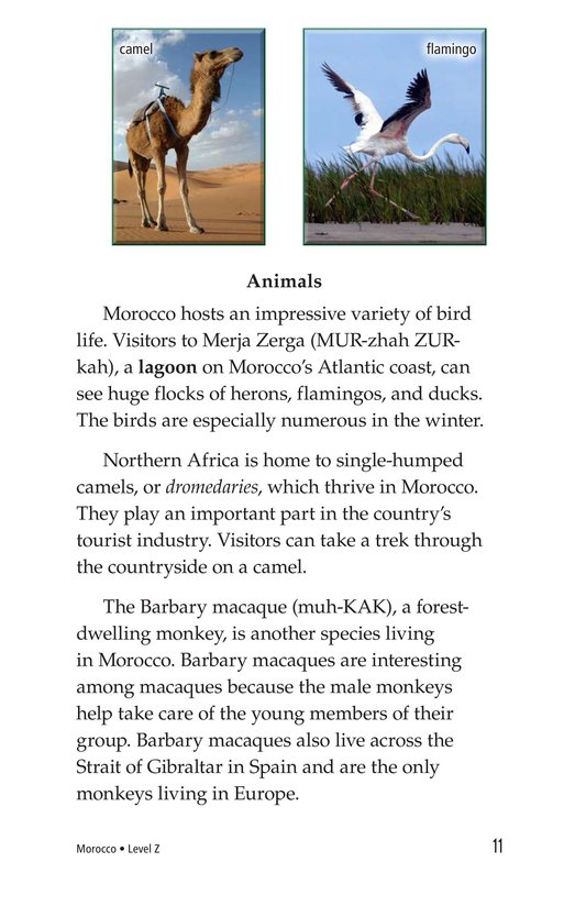 Book Preview For Morocco Page 11