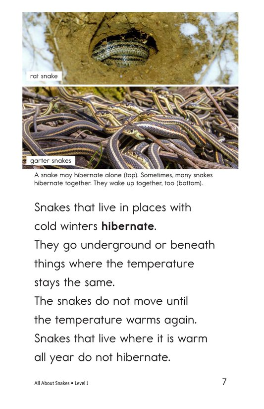 Book Preview For All About Snakes Page 7