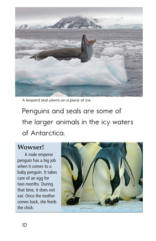Book Preview For Amazing Antarctica Page 10