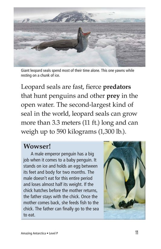 Book Preview For Amazing Antarctica Page 11