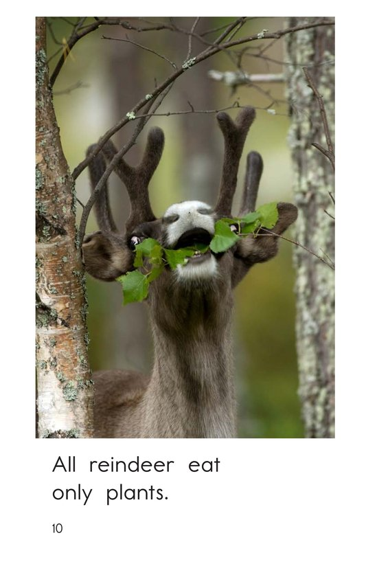 Book Preview For Reindeer Are Real Page 10