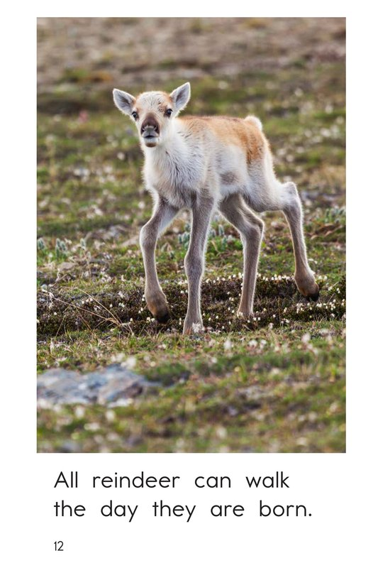 Book Preview For Reindeer Are Real Page 12