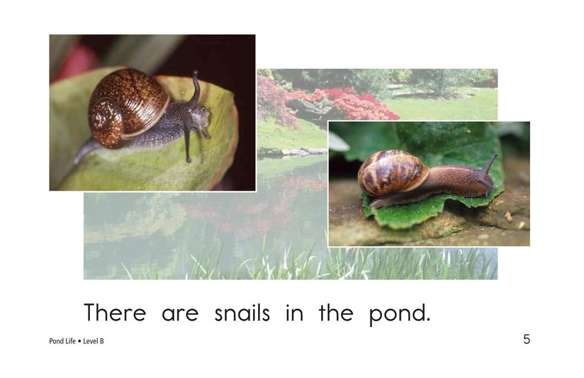 Book Preview For Pond Life Page 5