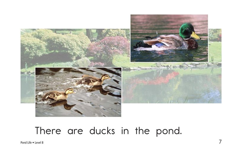 Book Preview For Pond Life Page 7