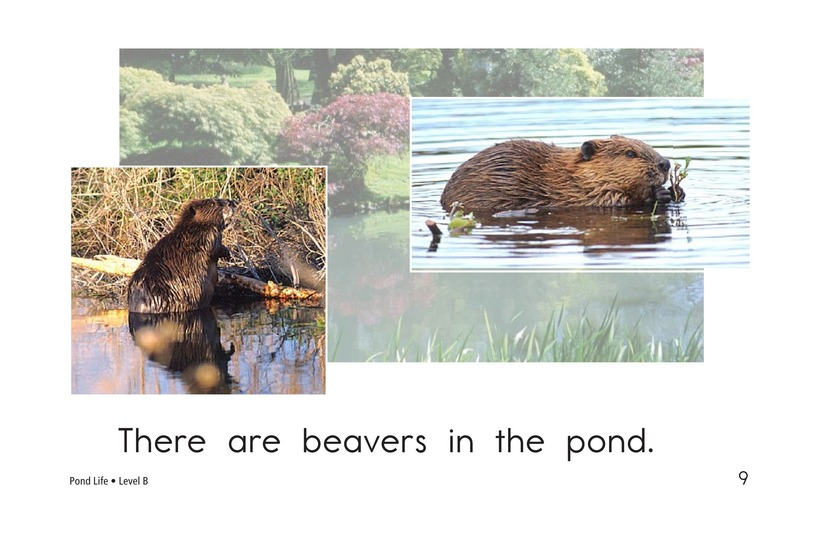 Book Preview For Pond Life Page 9