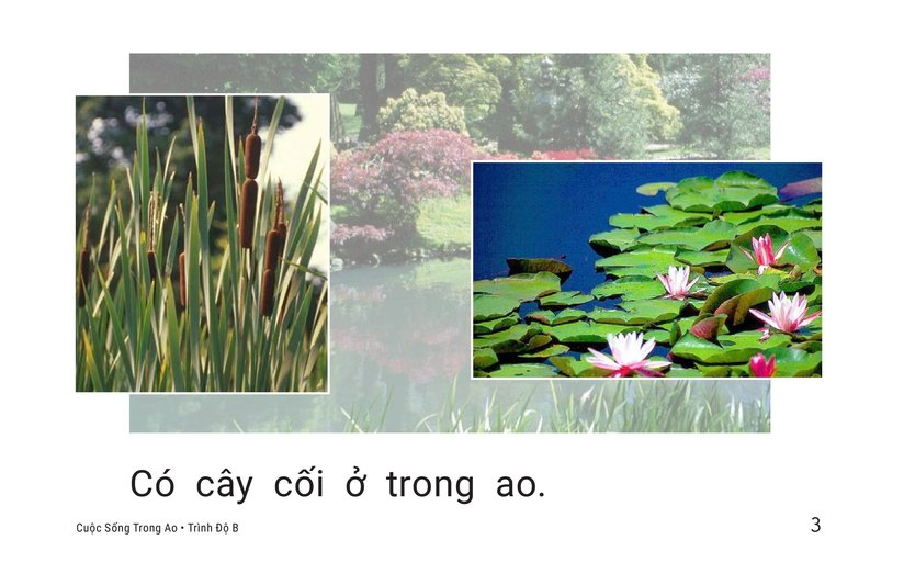 Book Preview For Pond Life Page 3
