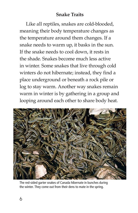 Book Preview For Slithery Snakes Page 6