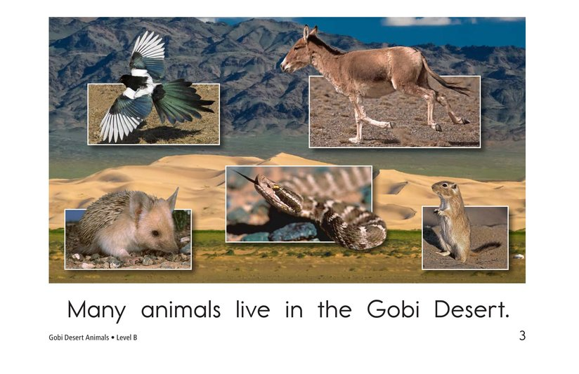 Book Preview For Gobi Desert Animals Page 3