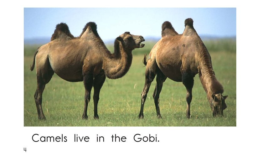 Book Preview For Gobi Desert Animals Page 4