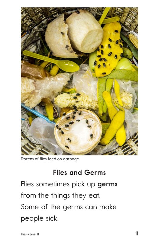 Book Preview For Flies Page 11